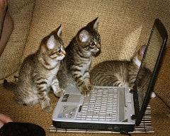 Cicák laptoppal