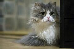 A cica elindul - bár nem Létavértesen